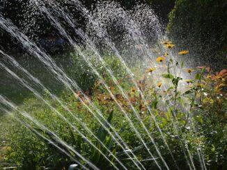 Garten richtig bewässern