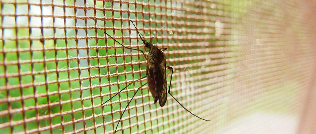 Mückenabwehr