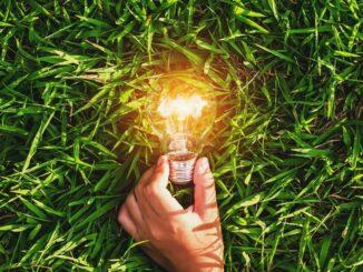 Hand, brennende Glühbirne, grünes Gras